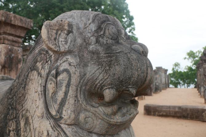 スリランカ ポロンナルワ ライオン